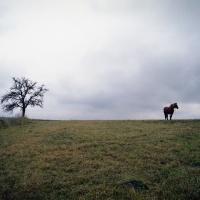 про лошадку